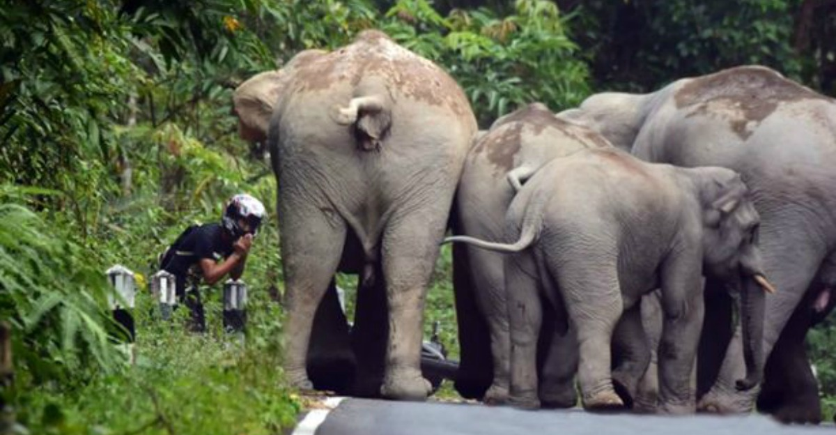 biker-begs-for-life-after-elephant-herd-attack